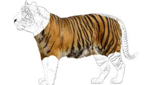 tiger sketch for kids and toddlers and animals drawing wild
