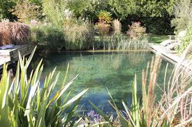 Vermont wild swimming images Pond swimming 6 things to know before you install a residential jpg