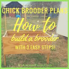 brooder plans how to build a brooder in 3 steps