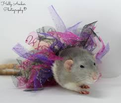 Best Bedding For Rats Rat Care Information Totes For Realz Rattery