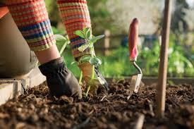green thumb gardening tips compass