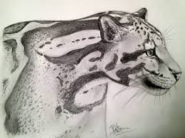clouded leopard sketch by yukilapin on deviantart