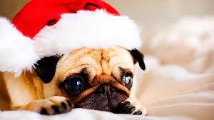 funny christmas dogs 43 youtube