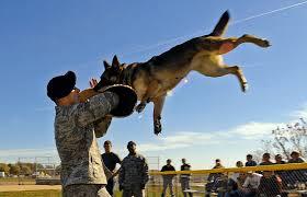 boxer dog kills man most dangerous dogs youtube