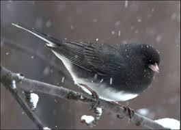 common birds bloom