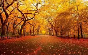 best thanksgiving 3d wallpapers background screensavers pagety