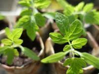 vegetable gardening for beginners the basics of planting