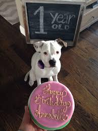 dog happy birthday cake litoff info