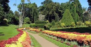 haggala botanical garden your driver sri lanka