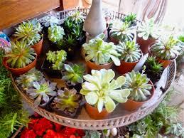 hamptons floral trend we u0027re sooo into succulents kdhamptons