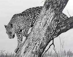 jaquar in tree drawing by stan hamilton