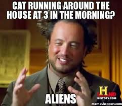 Cat Alien Meme - cat running around the house at 3 in the morning aliens meme