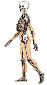 halloween cartoon skeleton vintage halloween image skeleton man walking the graphics fairy