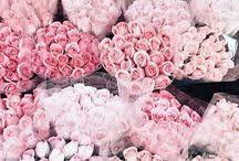 fleur de lis chagne flutes viviana franco vivif7 on