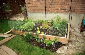 vegetable garden u2013 urban seedling