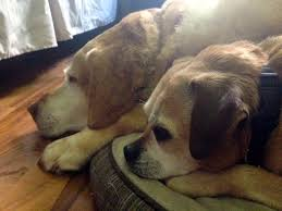 pet euthanasia is it beneficial to other pets present during euthanasia