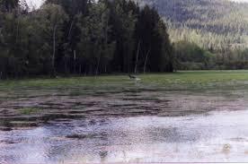 Wetland Resources Of Washington State by Washington State Wrp Photographs Nrcs