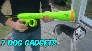 Coo Gadgets 7 Dog Gadgets Put To The Test Youtube