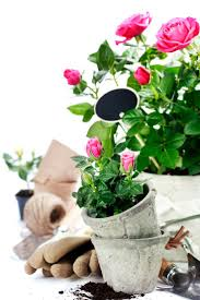 244 best gardening flowers images on pinterest garden ideas