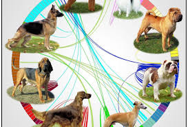Genetic Maps Of Europe by Old Dog New Dog Genetic Map Tracks The Evolution Of Man U0027s Best