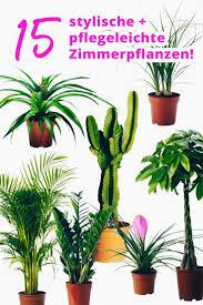 Wohnzimmer Pflanzen Ideen Die Besten 25 Pflegeleichte Zimmerpflanzen Ideen Auf Pinterest