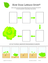 how does it grow lettuce lettuce worksheets and kindergarten