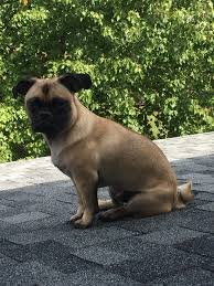 this is george george enjoys contemplating life on the roof get