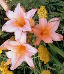 All Types Of Flowers List - flowers nature