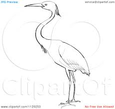 little blue heron coloring pages