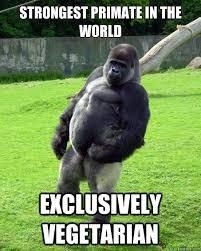 Funny Gorilla Memes - 9 vegetarian memes in honor of world vegetarian day 2016