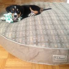 Ll Bean Dog Bed Enzo Loves His L L Bean Dog Bed Best Friends Pinterest Dog