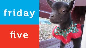 santa cat holiday animal video compilation petco friday 5