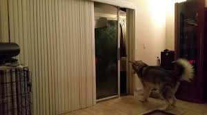 automatic patio pet door for large dogs youtube