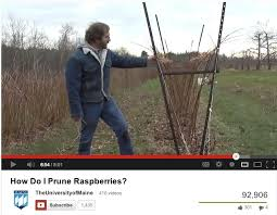 Rasberry Trellis Raspberries Mmmminneapolis