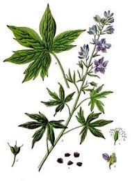 delphinium flower delphinium
