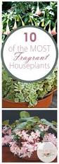 Fragrant Indoor House Plants The 25 Best House Plants Ideas On Pinterest Indoor House Plants
