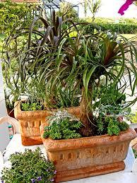 Indoor Garden Containers - 19 best palms images on pinterest houseplants indoor gardening