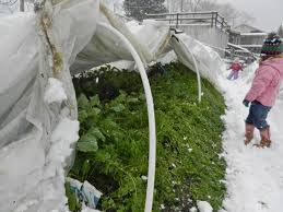 winter vegetable gardening mother of a hubbard part 2