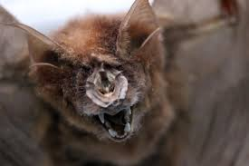 thousands of bats slaughtered annually in asia end up on ebay and