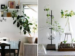indoor planting 20 unforgettable indoor plant displays ideas