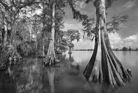 view all florida photographs archives clyde butcher black