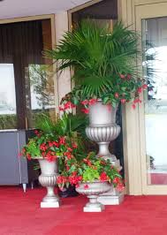 Fern Decor by Beautiful Chinese Palms With Angel Wing Begonias And Maiden Hair