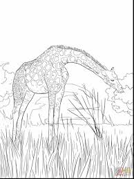 superb animal coloring pages clip art with africa coloring pages