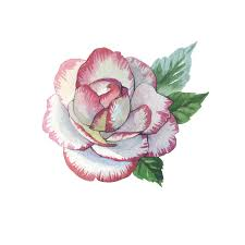 wildflower rose flower tattoo in a watercolor style isolated