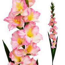 gladiolus flowers 6 stems 38 gladiolus silk filler flowers centerpieces