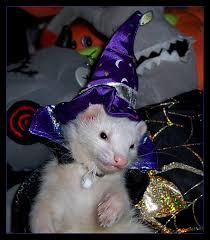 Ferret Costumes Halloween U0027s Ferret U0027s Rabbit U0027s Grumpy Toad Crochet