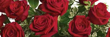 100 Flower Shops In Santa Phillip U0027s Flowers Chicago Florist In Naperville Wheaton La