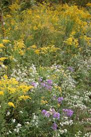 native plant sale muskoka conservancy 28 best nature walk wildflowers images on pinterest ohio book
