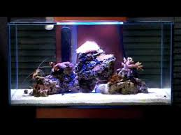 fluval edge marine light marine fluval edge nano reef with saltwater blue leds youtube