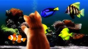 halloween fish background cats lion animals cats lions cat halloween photos for hd 16 9